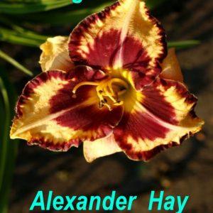 Alexander Hay